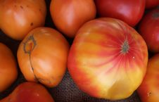 Free Organic Heirloom Tomatoes Royalty Free Stock Photo - 6212155
