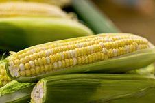 Free Corn Royalty Free Stock Photography - 6212177