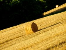 Free Hay S Rools In A Field Royalty Free Stock Images - 6213369