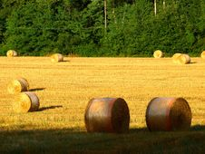 Free Field With Hay S Rolls Stock Images - 6213374