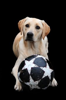 Free Labrador And Ball Stock Photos - 6214453