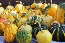 Free Halloween Pumpkins In The Grass Royalty Free Stock Photo - 6217895