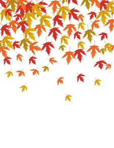 Free Autumn Leavestor Royalty Free Stock Photography - 6218027