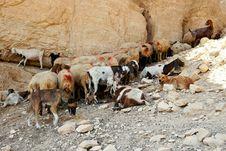 Free Herb Of Sheeps Stock Image - 6218181