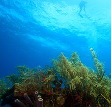 Free Snorkeler Stock Photos - 6218413