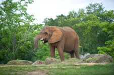Free Elephant Stock Photography - 6218622