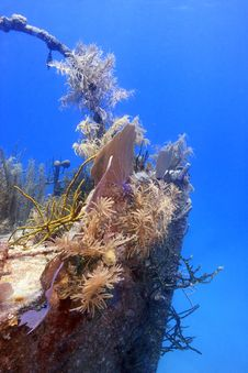 Free Underwater Wreck Of The Price Albert Covered Royalty Free Stock Images - 6218809