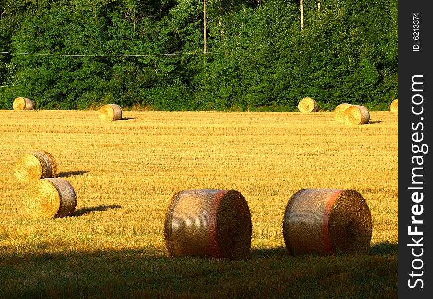 Field with hay s rolls