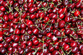 Free Cherry Fruit Royalty Free Stock Images - 6224819