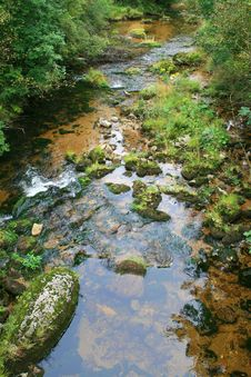 Stream In The Green Stock Photography