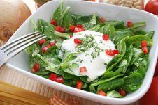 Field Salad Stock Image