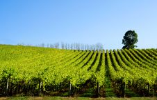 Free Rolling Vines Royalty Free Stock Photos - 6221858