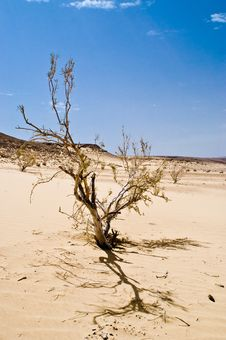 Free Desert Tree Stock Photo - 6222610