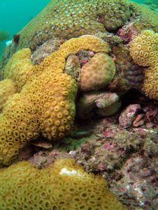 Free Common Octopus Stock Image - 6222611