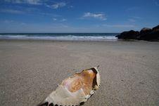 Free Crab Shell Royalty Free Stock Photos - 6222658