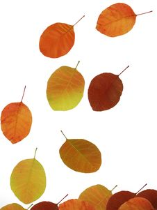 Free Autumn Leaves Stock Image - 6223051