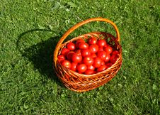 Free Tomato Basket Stock Images - 6224614