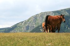 Free Horses Royalty Free Stock Image - 6224646