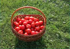 Free Tomato Basket Stock Photos - 6224703