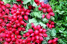 Free Bunched Radishes Stock Photography - 6224772