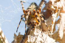 Free Spider Royalty Free Stock Photos - 6225318