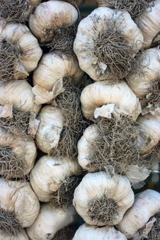 Free Garlic Stock Image - 6225521