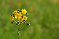 Free Dandelion On Grass Backgound Stock Images - 6225644