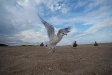 Free Super Close Seagull Stock Photo - 6226550