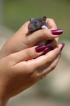 Free Mouse In The Hand Stock Photography - 6226582