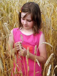Free Girl On A Field Of Wheat Stock Images - 6228624