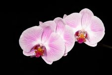Free Beautiful Orchid Stock Images - 6229014