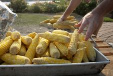 Free Corn On The Cob At Barbecue Stock Photos - 6229093