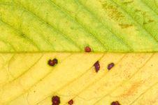 Free Leaf Background Stock Photos - 6229103