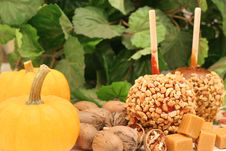 Free Candy Apples With Pumpkins Royalty Free Stock Photo - 6229605