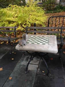 A Sciurus Carolinensis Sitting On A Chess Table In City Hall Park In Manhattan In The Fall. Stock Photography