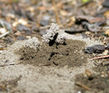 Free Ant Hill Stock Photo - 6232200