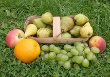 Free Orange On A Green Grass Royalty Free Stock Photos - 6231178