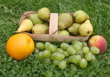 Free Grapes And Orange Royalty Free Stock Photography - 6231387