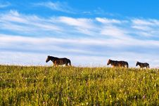 Free Horses On Green Meadow Royalty Free Stock Photos - 6231438