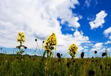 Free Meadow,blue Sky Royalty Free Stock Images - 6231439