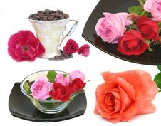 Free Roses On A White Background Stock Photography - 6231672