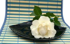 Free White Rose On A Black Plate Stock Image - 6231691