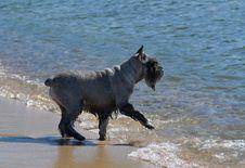 Dog At Beach Royalty Free Stock Photos