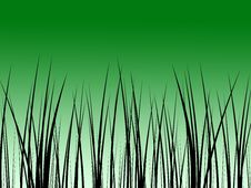 Free Green Gras Sunset Background Stock Photography - 6233732