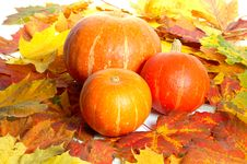 Pumpkins Between Maple Leves Royalty Free Stock Photo