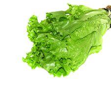 Free Fresh Lettuce Stock Images - 6234384