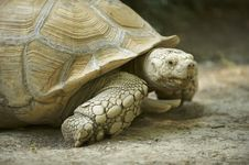 Free Giant Turtle Royalty Free Stock Images - 6234549