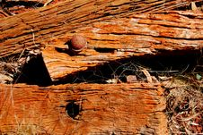Rotting Wood Royalty Free Stock Photography