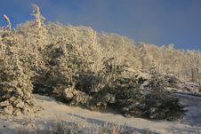 Free Winter Evening On Jedlova Hill Royalty Free Stock Photos - 6236158