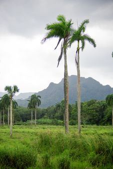 Free Tropical Palms And Mountains Royalty Free Stock Photos - 6238398